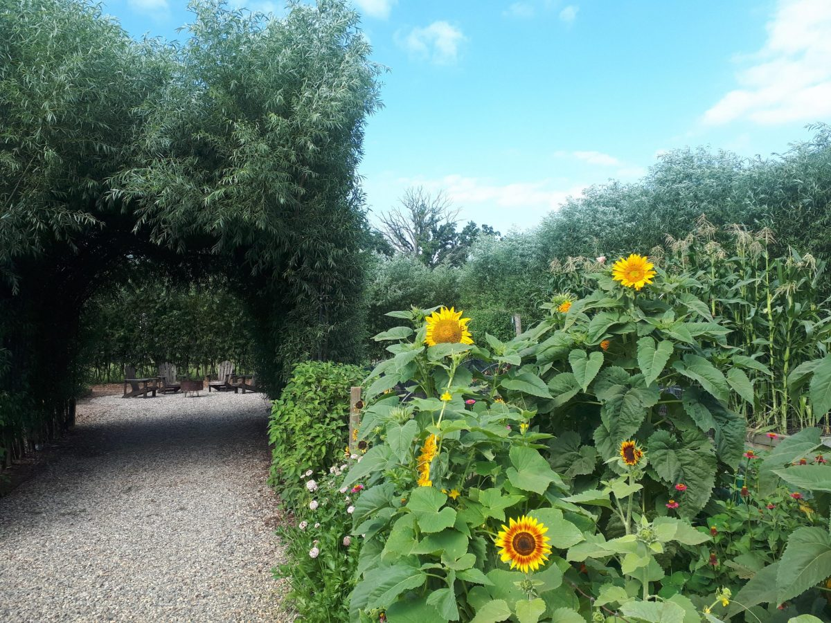 The garden archway at Zingerman's Cornman Farms