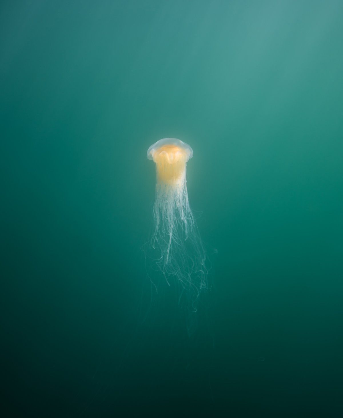 A jellyfish underwater